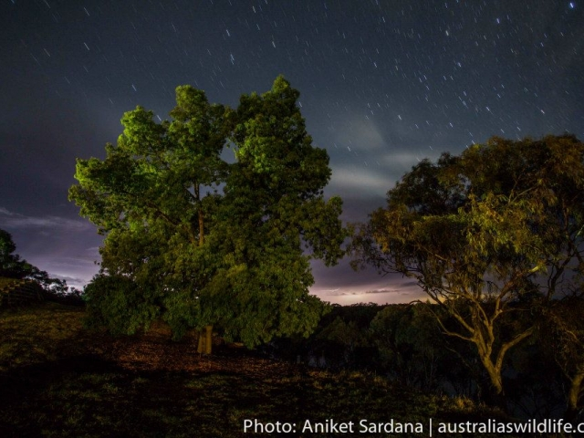 A long exposure night image of trees and the star-filled sky