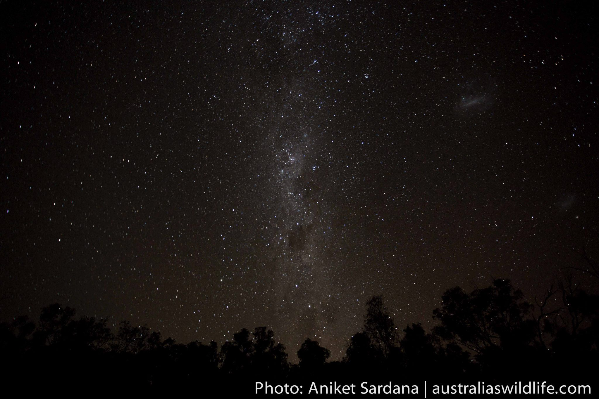 An night time image of the stars above the trees