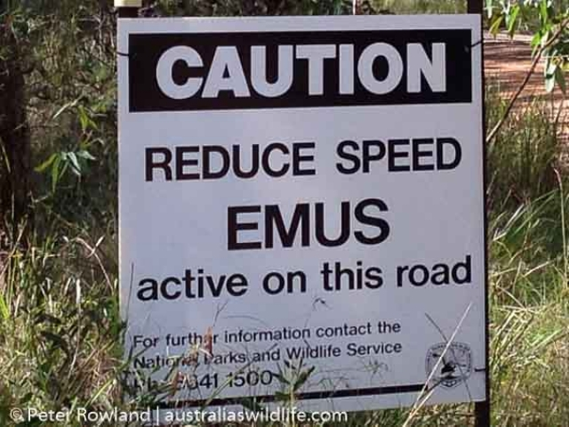 "Roadside sign that says ""Caution: Reduce speed - Emus active on this road"""
