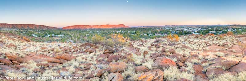 Looking over Alice Springs at dawn