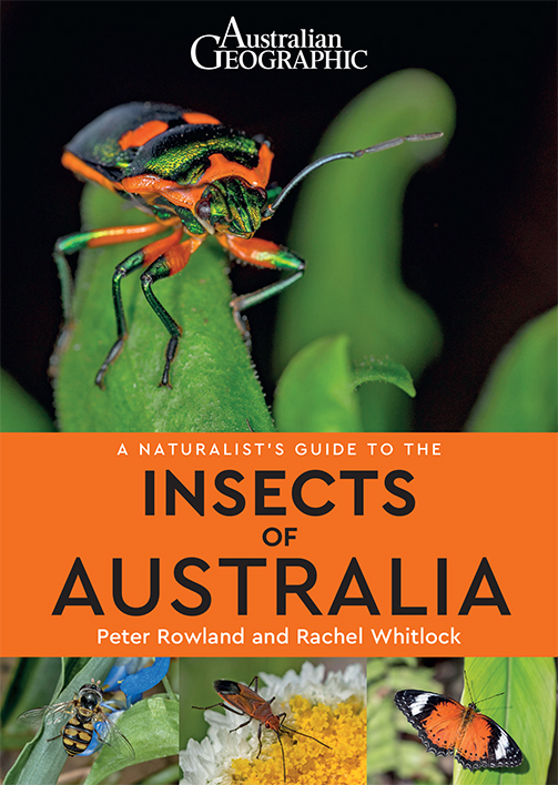 Front cover book A Naturalist's Guide to the Insects of Australia